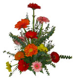 Gerbera daisies - Multicoloured Happiness