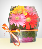 Congratulations - The Gebera Daisies Little Box