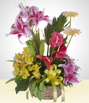 Send Flowers to :  Freshness Agreement: Gerberas, Aastromelias and Lilies.