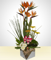 Paradise birds - Straight from the Heart Gorgeous Arrangement