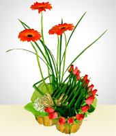 Gerbera daisies - Romantic Melodies Bouquet