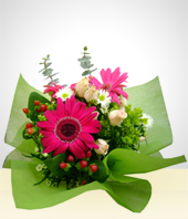 Anniversary - New!! Gerberas Bouquet