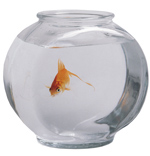 Cute Gifts - Goldfish