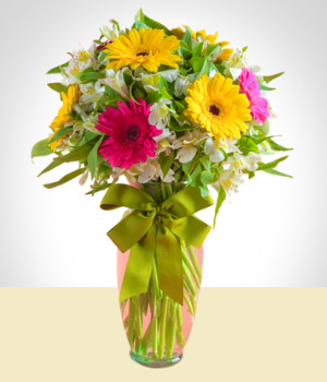 Send Flowers to :  Gerberas and Astromelias Arrangement