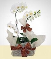 Flowers in a pot - Sweet Gift